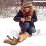 According to Siberian scientist Irina Mukhamedshina, her tamed fox is obedient like a dog, or more precisely, a cat. Tamed fox of Irina Mukhamedshina