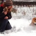 Irina Mukhamedshina, young Siberian scientist with her tamed fox Nyuta