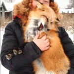 What a beautiful couple – Siberian scientist Irina Mukhamedshina with her tamed fox Nyuta