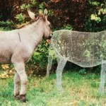 Even real donkey is surprised to see his relative - transperent 3D sculpture by Italian artist Benedetta Mori Ubaldini