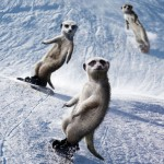getting their balance ready for another snowboarding session in December