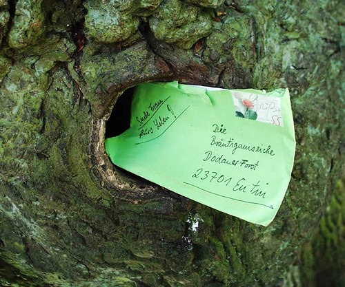 Love letters sent to a tree
