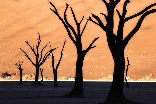 The Namib desert. Photography by Frans Lanting