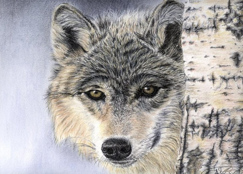 Le regard du loup. Hyperrealistic pencil drawings by French self-taught artist Anna Lenoir