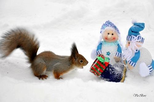 Squirrel and snowmaiden