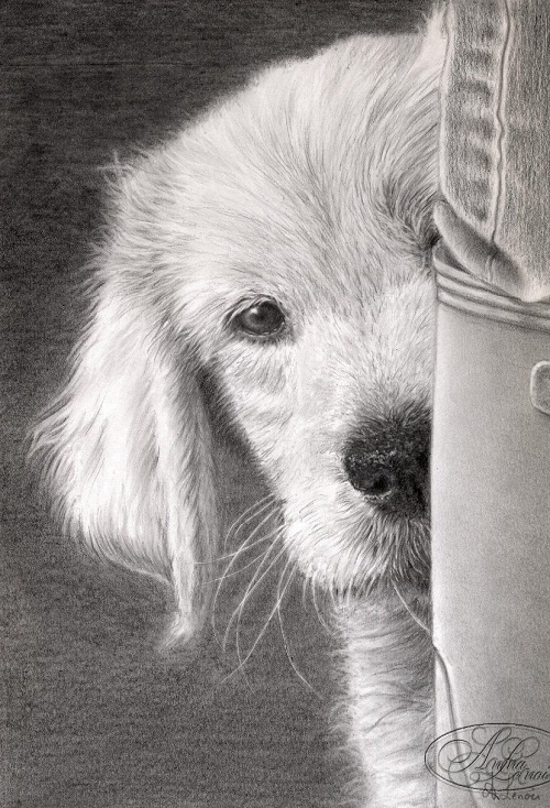 Hyperrealistic pencil drawings by Anna Lenoir