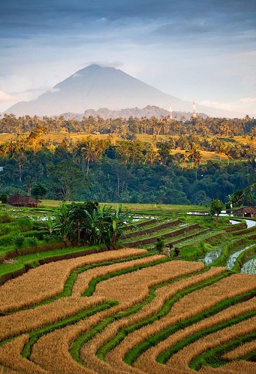 Beautiful Terraced rice fields in Bali