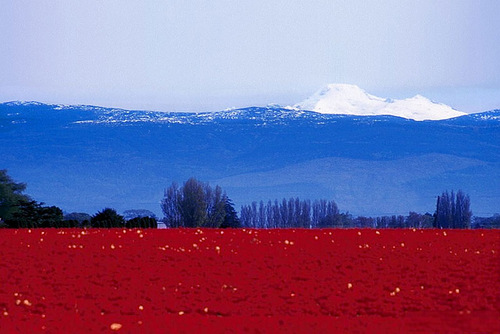 Flags in nature. Russian flag in nature