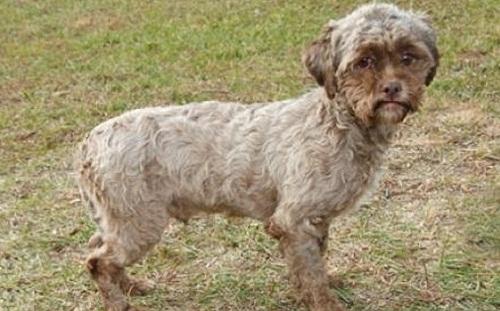 Tonik, human faced dog