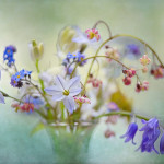 "The photographs from the Seventh annual International competition ""Garden photographer of the Year"""