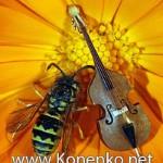 Anatoly Konenko website's logo