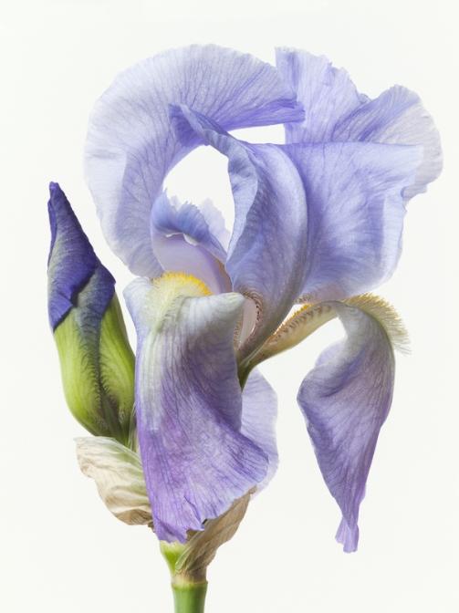 Paul Lange's beautiful photographs of flowers