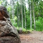 Pokaini forest in Latvia