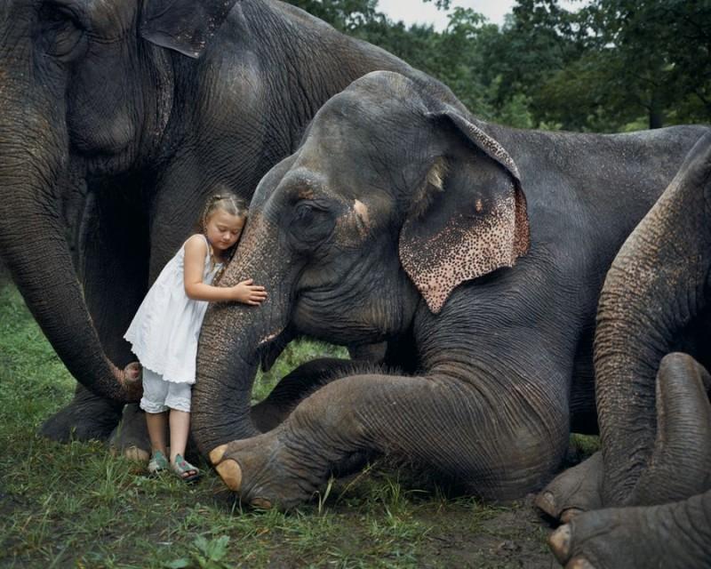 Amelia and her animals