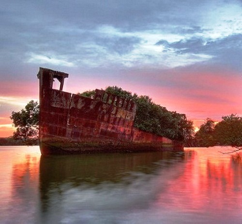 Abandoned ship has turned into Floating Forest