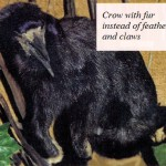 Crow with fur instead of feathers and claws