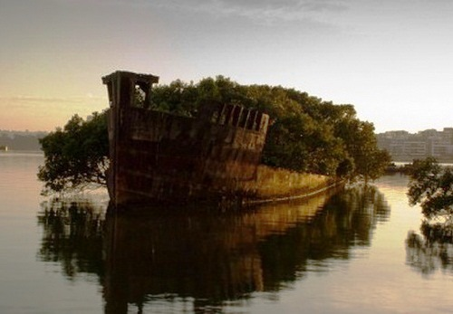 Abandoned ship - Floating Forest