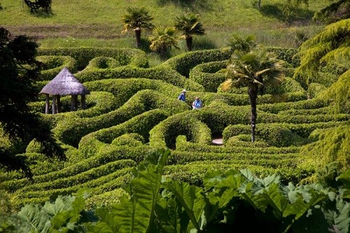 Laurel maze at Glendurgan Garden — Cornwall England