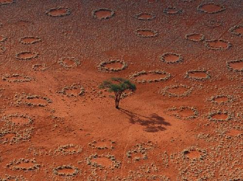 Mysterious circles of Namibian desert