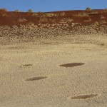 Witches' rings - natural phenomenon of Namibian desert