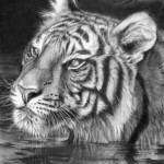 """Big cats"". Photo-realistic drawing by British artist Peter Williams"