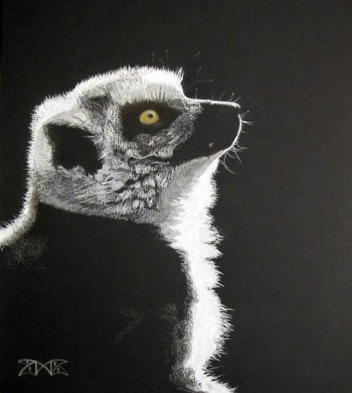 Golden eye - Lemur
