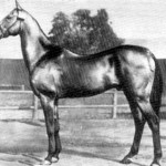 Stallion Melekush, presented in 1956, by Nikita Khrushchev to Elizabeth