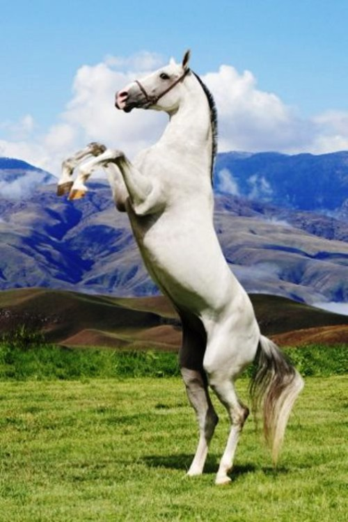Beauty Will Save Akhal Teke The Most Beautiful Horse In