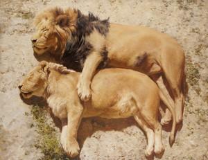 sleeping lions, painting by Russian artist Vladimir Alexandrov