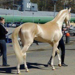 Akhal-Teke the most beautiful horse in the world
