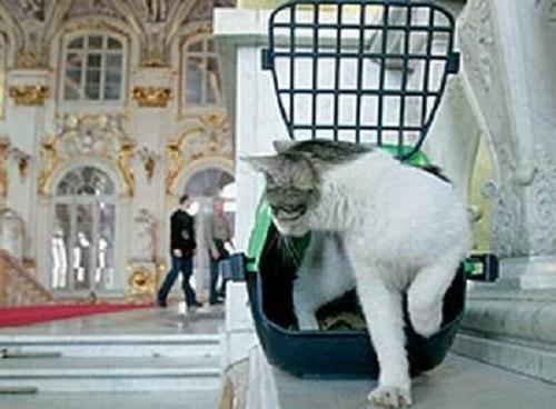 Macke ljubimci i lutalice i ostali ljubimci - Page 2 Cats-of-State-Hermitage-St.-Petersburg-4