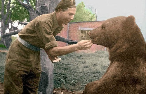 Bear Soldier Wojtek Beauty Will Save