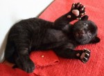 Rare Black Tiger cub at Hangzhou Zoo