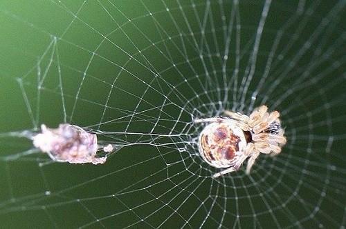 Slavic calendar 2015 White Owl year. Spinning Mizgir (Spider)