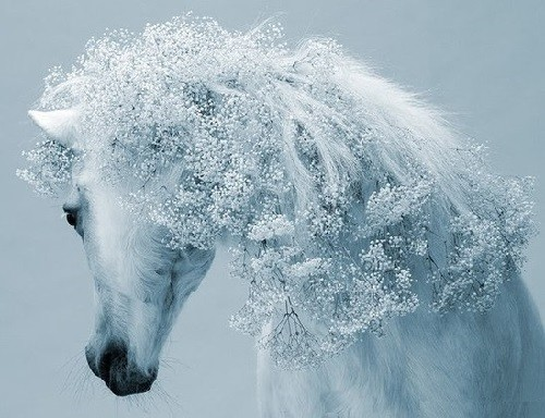 Stylish horses hairstyles. Photographer Svetlana Petrova