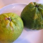 Uglifrut (Ugli) – a hybrid of grapefruit, orange and tangerine