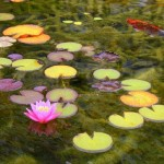 Water lilies on the overgrown areas of the lake