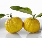 Yuzu, Japanese lemon