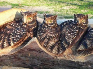 Realistic Wood Sculptures of owls by Randall Boni