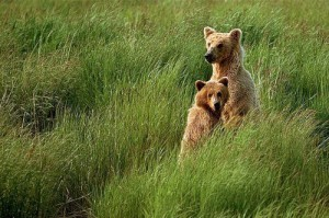 Bears. When a man has pity on all living creatures