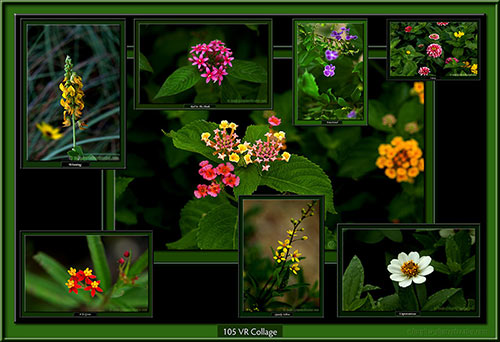 With a few flowers in my garden, half a dozen pictures and some books, I live without envy. Lope de Vega