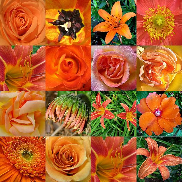 Flowers grow out of dark moments. Corita Kent
