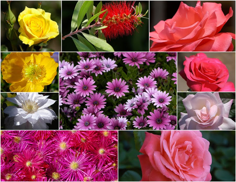 Let a hundred flowers bloom. Mao Zedong