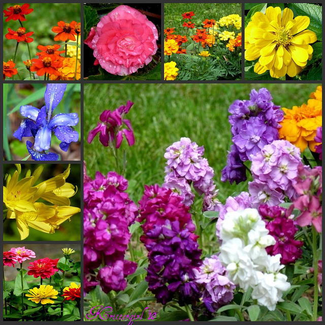 Arranging a bowl of flowers in the morning can give a sense of quiet in a crowded day - like writing a poem or saying a prayer. Anne Morrow Lindbergh