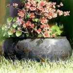 Pot plant. Painting by Korean artist Shin Jong Sik