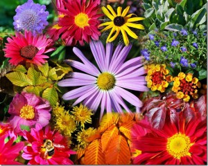 Flowers... are a proud assertion that a ray of beauty outvalues all the utilities of the world. Ralph Waldo Emerson