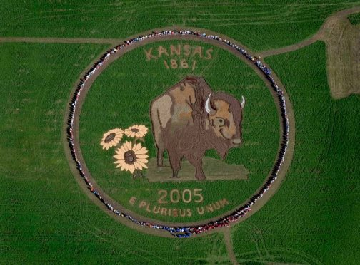 The Kansas state animal, the American buffalo (bison), and flower, the sunflower, is highlighted as symbols of Kansas