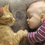 A red cat and a baby