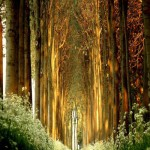 Kingdom of trees