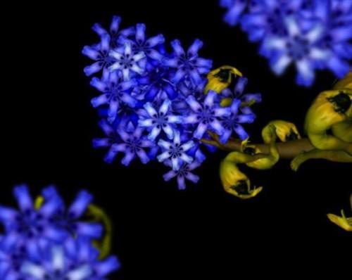 Digital photography art by Cecelia Webber